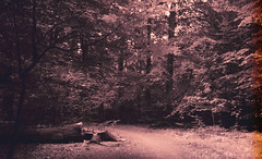 Forest of dreams (Rosenthal Photography) Tags: rodinal12520°c18min städte zeven color ff135 ahe juli mehde c41 20180805 analog asa200 olympus35rd sommer fujisuperia200 dörfer siedlungen forest landscape july summer mood trees river bridge path pathway track trail olympus olympus35 35rd fzuiko zuiko 40mm f17 fuji superia xtra rodinal 125 epson v800 dreams