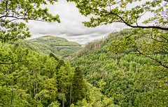 Nature at it's best in the Rheidol Valley, Aberystwyth (samanthalewisphotography) Tags: aberystwyth devilsbridge wales nature valleys trees landscape rheidol