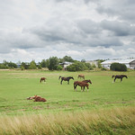 Beautiful Baltic countryside thumbnail