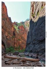 2D-TheNarrows-107 (stereo_eyz) Tags: zion nationalpark utah virginriver hiking canyon rock water narrows