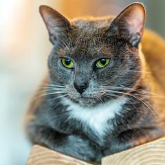 Javacatscafe08Sep20180443.jpg (fredstrobel) Tags: javacafecats javacatscafe atlanta places animals ga pets cats usa georgia unitedstates us