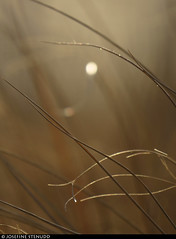 20170101_35 Grass straws & bokeh | Rockaway Park, New York City (ratexla) Tags: ratexlasnewyorktrip2016 newyorkcity 1jan2017 2017 canonpowershotsx50hs nyc newyork usa theus unitedstates theunitedstates america northamerica nordamerika earth tellus photophotospicturepicturesimageimagesfotofotonbildbilder wanderlust winter travel travelling traveling journey vacation holiday semester resaresor urban city town storstad storstäder storstadssemester newyearsday ontheroad rockawaypark rockawaybeach beach beaches strand stränder sandy sandstrand sand grass gräs nature plant plants pretty cool biology botany wild vild vilda life organism växt växter bokeh beige