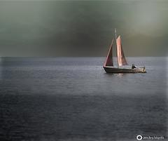 Braunes Segel im Wind (john_berg5) Tags: sail wind boot ship landscape minimalismus light brown dars