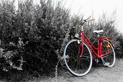 Mi vieja bici - La mia vecchia bicicletta - My old bicycle (Álvarez Bonilla) Tags: bicycle bicicletta tree rojo rosso red bush cespuglio arbusto albero candado padlock lucchetto cádiz
