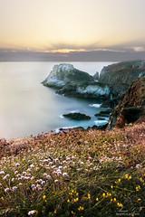 Danse du soleil sur la Pointe de Van (Pamprelune images) Tags: ocean atlantic france bretagne sunset sunlight longexposure colors bright flowers cliff rocks canon canon80d
