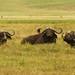 Safari Day 4 Ngorongoro crater