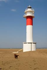 Laika al Far del Fangar (Hachimaki123) Tags: paisaje landscape deltadelebre puntadelfangar fardelfangar laika animal perro dog