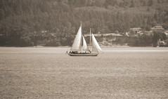 The Wind Is Right (~~J) Tags: sailboat sepia canvas sails pugetsound haze grain explored