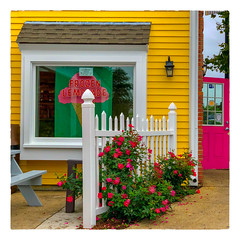 FROZEN LEMONADE (Timothy Valentine) Tags: 2018 flowers large 0918 friday fence plymouth massachusetts unitedstates us