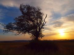 LONELY TREE2018 P9017475 (hans 1960) Tags: tree baum nature natur landschaft landscape sun sunrise sonne sonnenaufgang himmel sky wolken clouds äste wiese feld outside outdoor