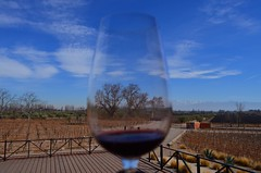 Vistandes, Maipú. Mendoza. (riegoden) Tags: mendoza argentina montains winelovers winetime winecellar winetasting winery tree naturelovers natureza