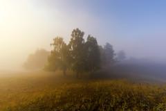 Осенние этюды #maksileni, #Максименко_Леонид, #Leonid_Maksimenko, #своифото, #пейзаж, #природа, #утро, #рассвет, #дерево, #натура, #восход, #sunrise, #nature, #tree, #Landscape, #sun,#природа, #небо, #небоголубое, #сониальфа, #сониа6000, #sonyalpha, #sony (ЛеонидМаксименко) Tags: сониа6000 maksileni leonidmaksimenko foggy natgeoru nature небо природа натура дерево sun рассвет своифото sunrise natgeorussia сониальфа пейзаж восход sonyalpha небоголубое утро лучи sonya6000 tree landscape natgeoyourshot туман максименколеонид