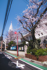 Nishi-Shinjuku - Tokyo, Japan (inefekt69) Tags: japan tokyo shinjuku nishishinjuku sakura cherry blossoms flowers nature spring hanami nikon d5500 日本 東京 新宿 さくら 桜 花見 tree