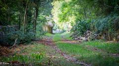 Passage des capucins (Kilian Savage) Tags: saintmihiel meuse nature wild forêt wood trees arbres