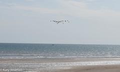 Sky, sea, beach, birds, boat (Katy Wrathall) Tags: 2018 summer beach eastyorkshire august fraisthorpe coast eastriding seaside