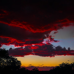 red tinged clouds 05Sep16 (johngpt) Tags: trees fujinonxf55200mmf3548rlmois silhouette sunset fujifilmxt1 fromtheroof panorama places clouds sliderssunday hss