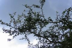 IMG_6159 (mohandep) Tags: hessarghatta lakes karnataka butterflies birding nature wildlife insects signs food