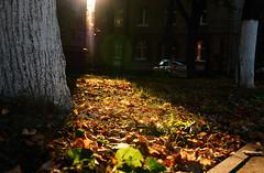 Evening light. (GlebLv) Tags: sony a6000 sigma30mmf14dcdncontemporary autumn september light fallingleaves cityscape