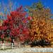 First Color of Autumn, Oak Glen, CA 2017