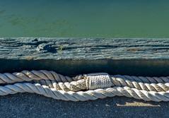 P1120036.jpg (Caffe_Paradiso) Tags: sanfrancisco tallship fishermanswharf rope