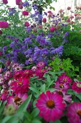JLF19862 (jlfaurie) Tags: jardin hôteldeville evéché bourges jlfr mechas mpmdf lucila 21082018 flores garden flowers