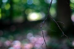 Minolta 50 AF ISO800 1/250 f1.7 (freudensammler.photography) Tags: vintagelens nature bokeh bokehlicious forest