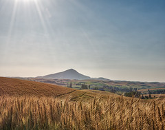 Under the Sun (jlove60) Tags: steptoebutte wheatfields sunshine