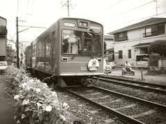 Randen (yukky89_yamashita) Tags: 京都市 嵐電 車折神社駅 朝顔 flowers train randen kyoto japan モノクロ monochrome