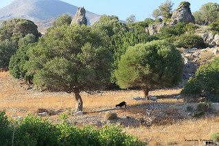 Cretan countryside...,on  a summer day.