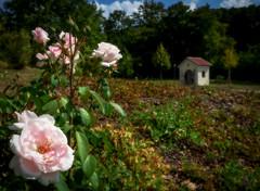 Im Rosengarten (kurtwolf303) Tags: mayerling rosen roses kapelle österreich austria orton flower garden mft kurtwolf303 olympusem1 omd microfourthirds micro43 blume