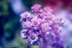 - (-LilyBeth) Tags: nature nikon d3000 natura bokeh dof depthoffield wonderfulworld flowers flower colors 50mm flickr outside texture blu light pink summer plants