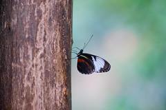 Butterfly (keysersoeze) Tags: butterfly konica hexanon ar 135mm f32 konicahexanonar135mmf32