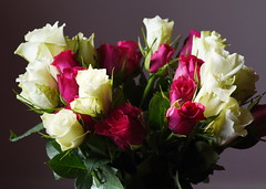 DSC_1521 (PeaTJay) Tags: nikond750 sigma reading lowerearley berkshire macro micro closeups gardens indoors nature flora fauna plants flowers bouquet rose roses rosebuds