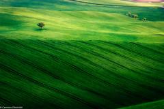 Tonalità di verde (SDB79) Tags: molise ururi colline verde campagna paesaggio terra grano