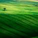 Tonalità di verde