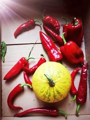 Harvest (Baubec Izzet) Tags: baubecizzet autumn harvest yellow red light nature