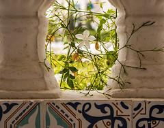 Fleur de jasmin. (Lucie Kratz) Tags: jasmine flower balcony tunisia jasmin fleur balcon tunisie gx80