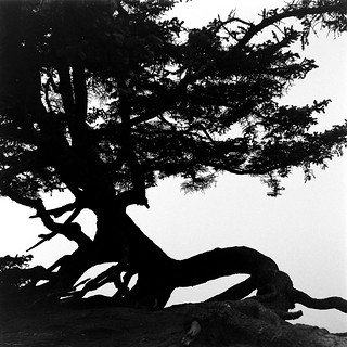 Twisted Tree Silhouette