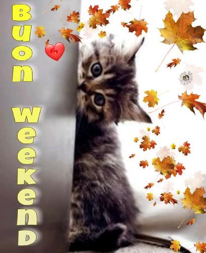 Gif Buon Weekend Cat Page Tiziana Mosso Kitten