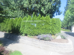 IMG_8347 (Andy E. Nystrom) Tags: bellevue washington wa bellevuewashington
