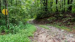 Oil Camp Creek Road (MarksPhotoTravels) Tags: greenvillecounty mountainbridgewildernessarea southcarolina