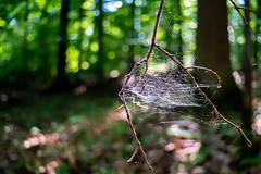Lydith ISO800 125 f3.5 (freudensammler.photography) Tags: vintagelens nature bokeh bokehlicious forest spiderweb