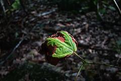 mont st-gregoire 2 (jeanbernardvidal) Tags: canon feuilles montagne automne