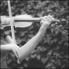 Al fresco performance (G. Postlethwaite esq.) Tags: dof sonya7mkii beyondbokeh bokeh bow depth depthoffield flower garden mirrorless musicalinstrument outdoors photoborder plant selectivefocus strings violin wifey