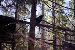 Sápmi (La fille renne) Tags: film analog 35mm lafillerenne finland lapland sápmi roadtrip travel landscape nature canonae1program 50mmf18 kodak kodakcolorplus200