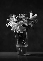 Lilies (tvdijk19) Tags: grid stilllife stilleven lelies fujixt2 teunvandijk flash flitslicht studio blackandwhite bw lilies lilies03 nature natuur plant bloem flower flowers lily softness zachtheid zacht soft nocolor zwartwit monochroom