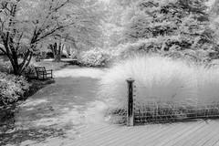 A Walk in the Park (Neal3K) Tags: fayettecountyga fayettevillega 590nmir infraredcamera kolarivisionmodifiedcamera