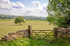 SJ1_0362 - Lancashire farmland (SWJuk) Tags: barnoldswick england unitedkingdom swjuk uk gb britain lancashire foulridge canal leedsliverpoolcanal fields farmland countryside landscape scenery grass trees drystonewalls gate bluesky clouds 2018 aug2018 summer nikon d7200 nikond7200 rawnef lightroomclassiccc tokina1116mm wideangle