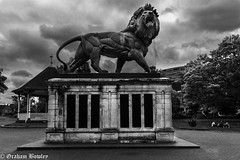 The Maiwand Lion (Graham Bowley) Tags: garden morning maiwandlion berkshire monochrome forbury reading
