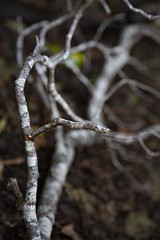 reference-111 (TLCStudentReferences) Tags: helenastackhouse lichen moss tree leaves fun bokeh nz
